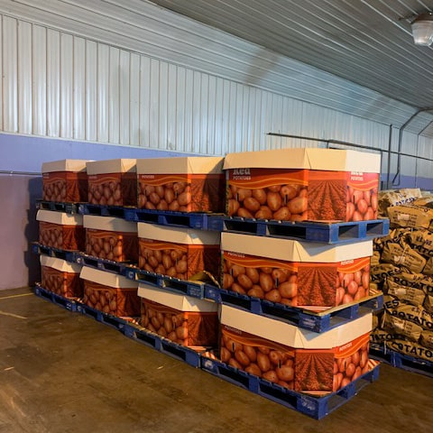 Careful packing and storage of potatoes at Campbell Farms. Pallets ready for shipping